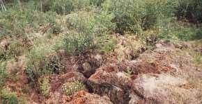 Набухание грунта при замачивании его различными жидкостями