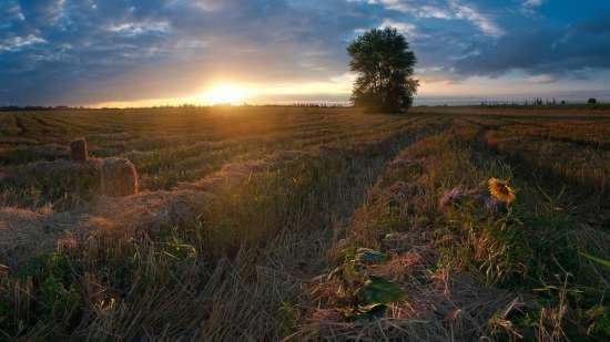 Фото некошенное поле осенью 6