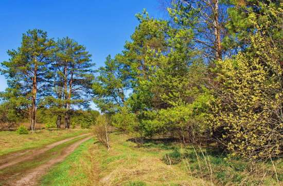 Подвижной состав автомобильных лесовозных дорог