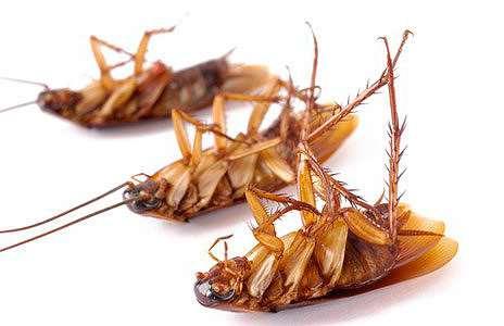 Все виды ловушек для тараканов