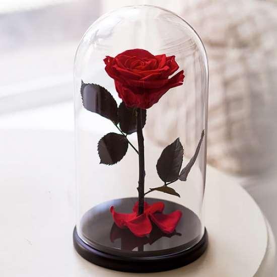 Роза, которая будет радовать годами