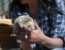 Необычная история ёжиков в Херсоне