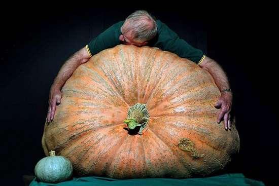 Фермер из Ровно выращивает гигантские тыквы