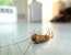 Как избавиться от тараканов: простые и эффективные методы