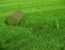 Много зелени не бывает — искусственный газон в рулонах