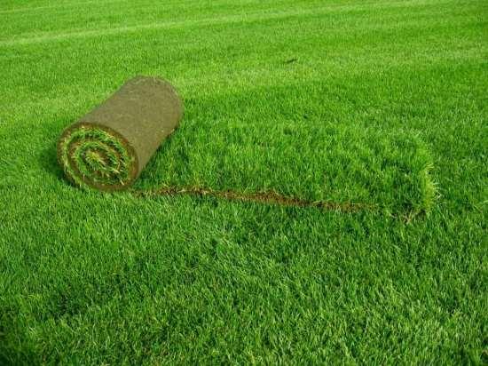Много зелени не бывает - искусственный газон в рулонах