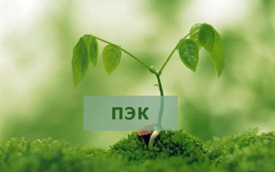 Программа ПЭК: разработка и основные нормативы