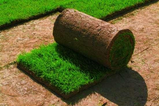 Уход за рулонным газоном в сочи