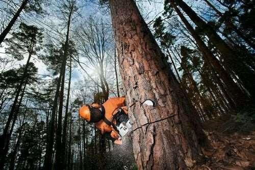 Спил и удаление деревьев опытными спецами