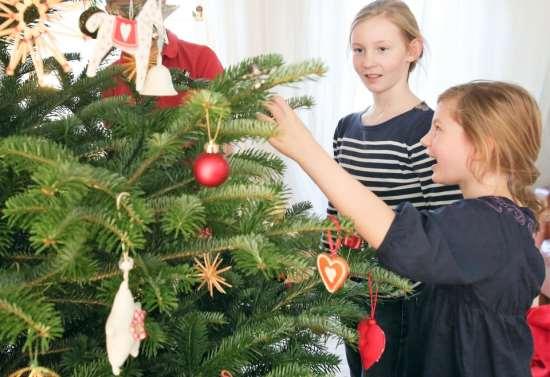 Как выбрать живую новогоднюю елку