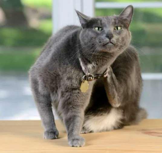 У кошки на подбородке болячки: основные причины