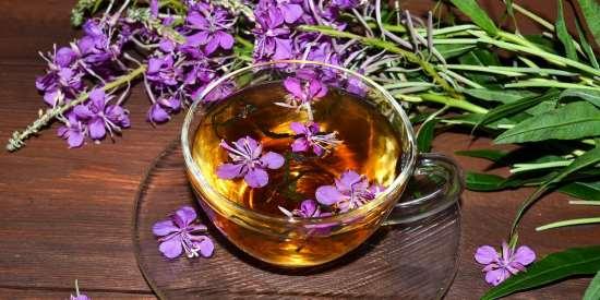 Иван-чай: предельная польза для организма